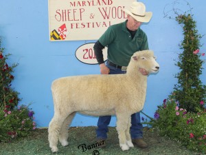 Anchorage 1072-12 Tw  best-fleeced white Romney MD Sheep and Wool Fest 2013
