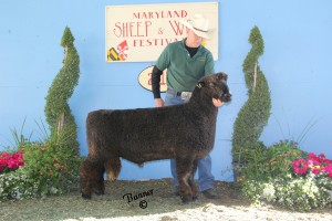 Pitchfork Ranch 721BBCh. natural-colored ram and best-fleeced.Maryland Sheep and Wool Festival 2014