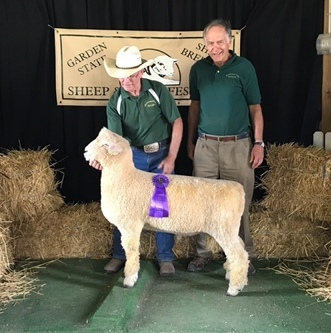 Res Natl Ch white Romney ram and best-fleeced at National Show 2017