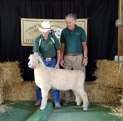 Natl Ch ewe white Romney 2017