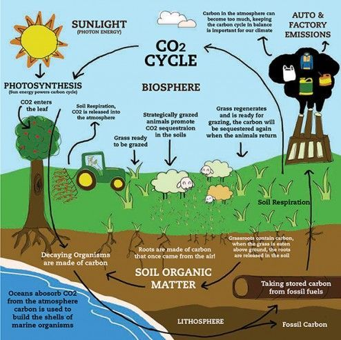 Carbon Sequestration And Storage In Soil