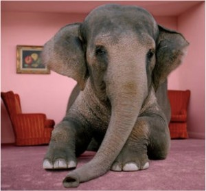 Elephant in the parlor